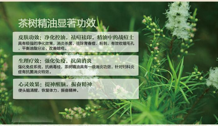 茶树精油的功效